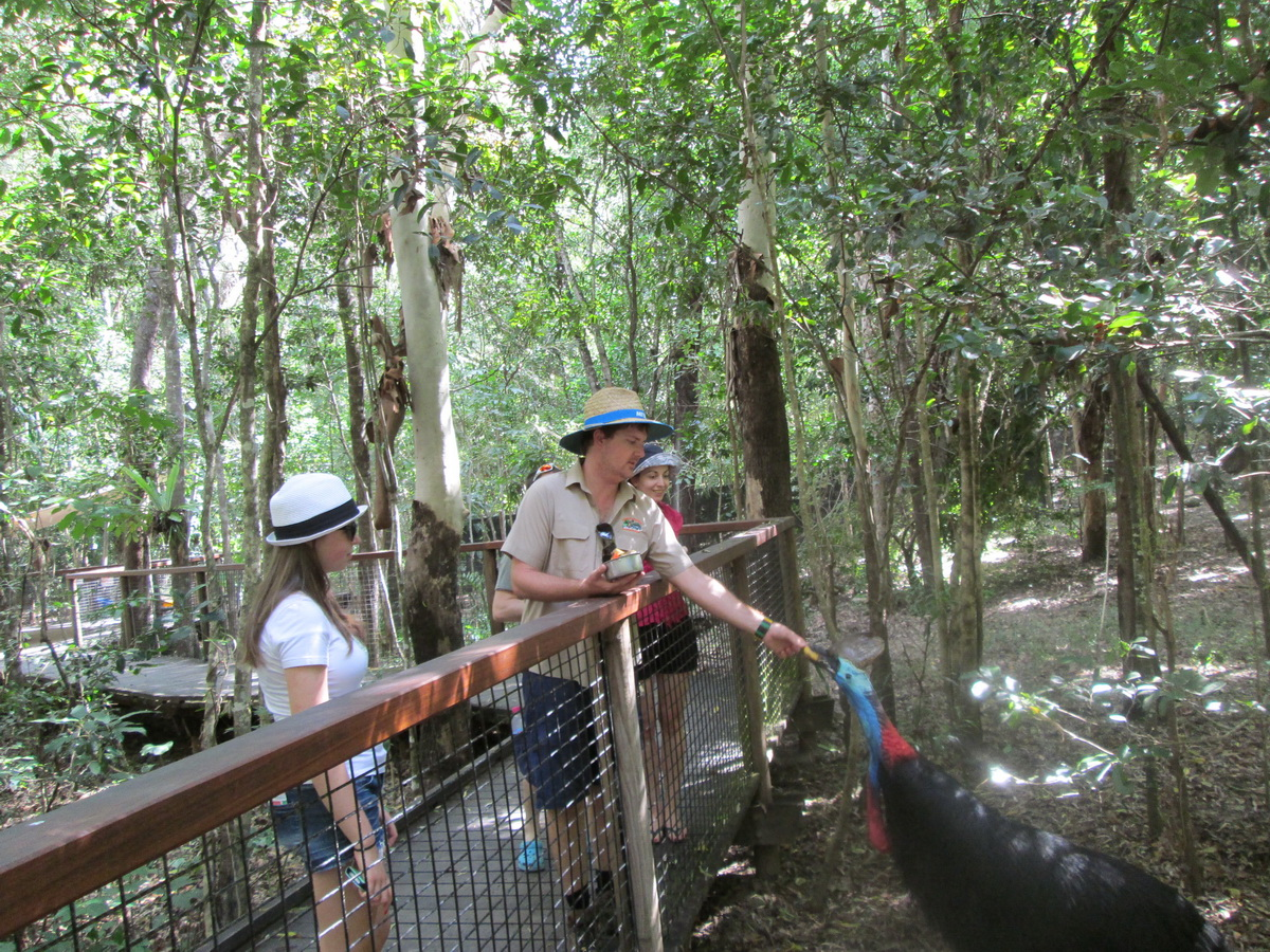 Wet Tropics and Crocodiles Private Tour