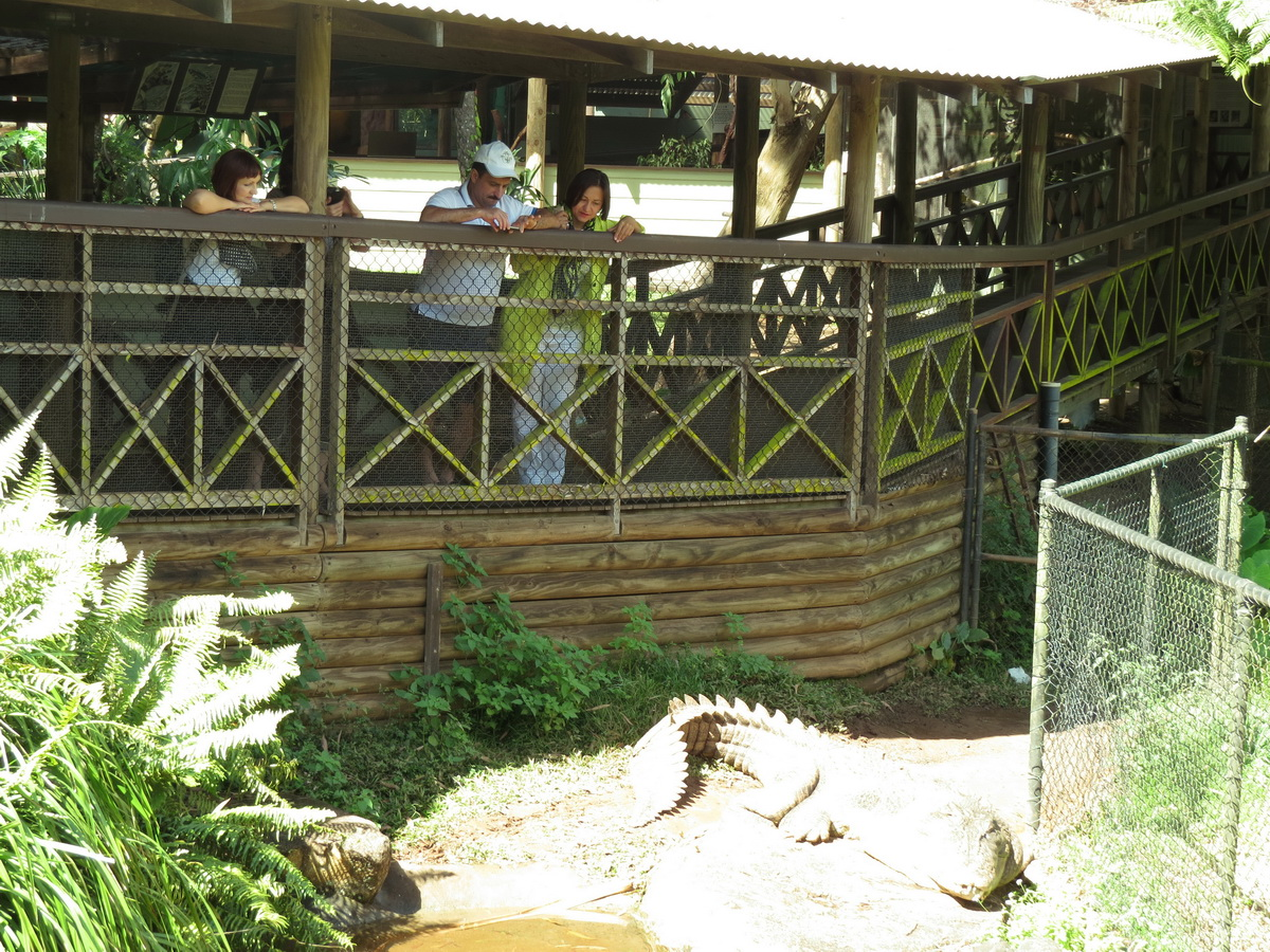 Kuranda Private Tour